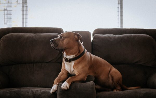 Pets e Sofás: como ter uma boa relação